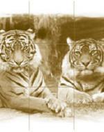 Тигры, коричневый