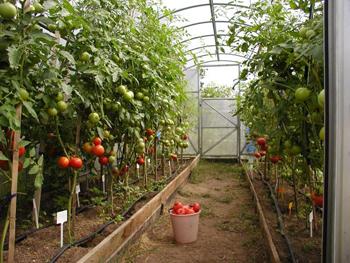Какой должна быть теплица-сад